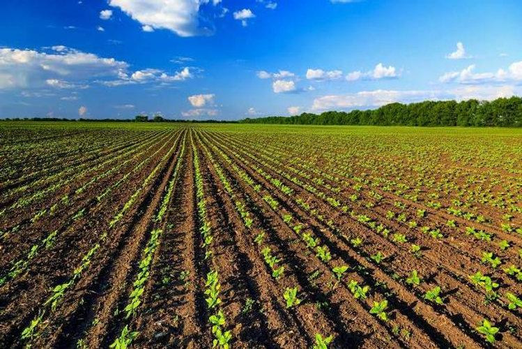 agricoltura-biologica-italia-primato-eur