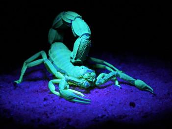 Full Moon In Scorpio: No Stone Unturned