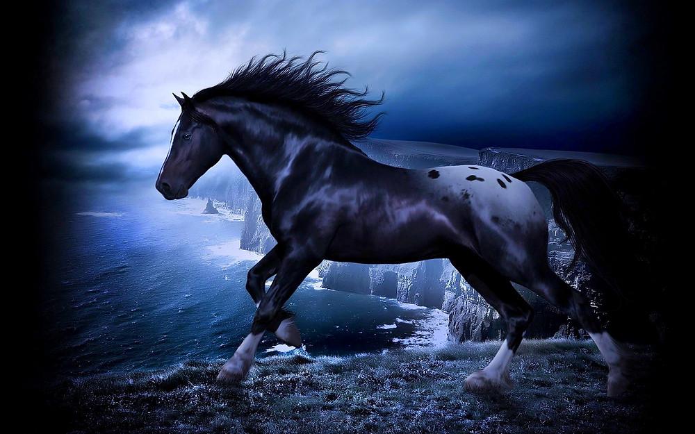 stallion 1.jpg