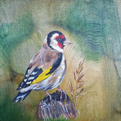 The Goldfinch Song