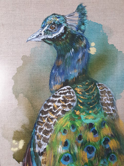 The Peacock's Tale