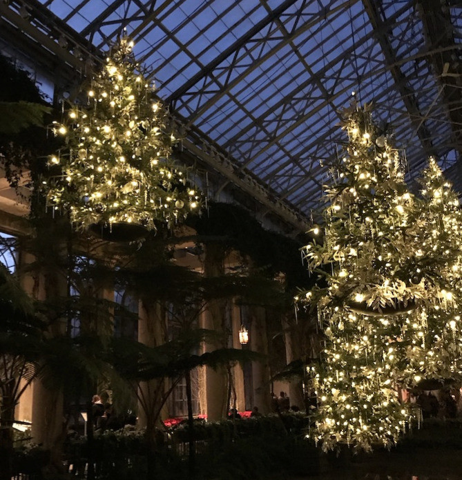 Trees decorated with holiday lights at Longwood Gardens