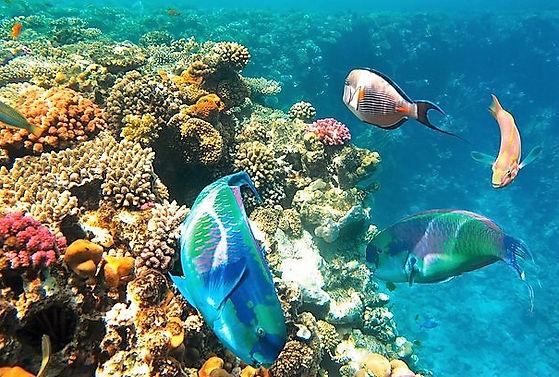 египет море.jpg
