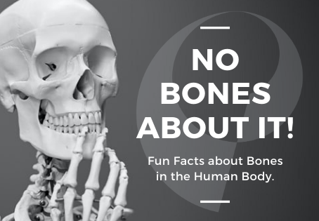 No Bones About it! Fun Facts About Bones in the Human Body.