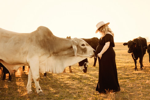 maternity-cows-outdoors-pasture
