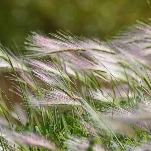 0051_Connecticut_Grass_Field.jpg