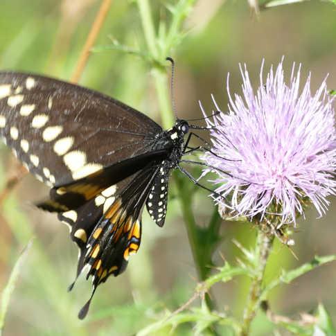 0047_Butterfly_in_a_Field.JPG