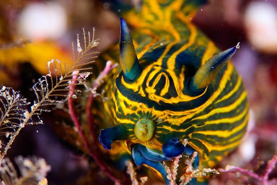 nudibranqui, Ulisses turatti, curso, mergulho, rio, padi, scuba, dive