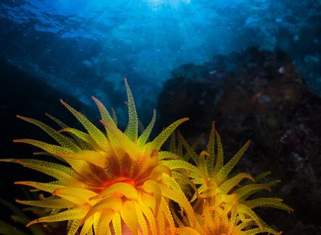 Coral Sol