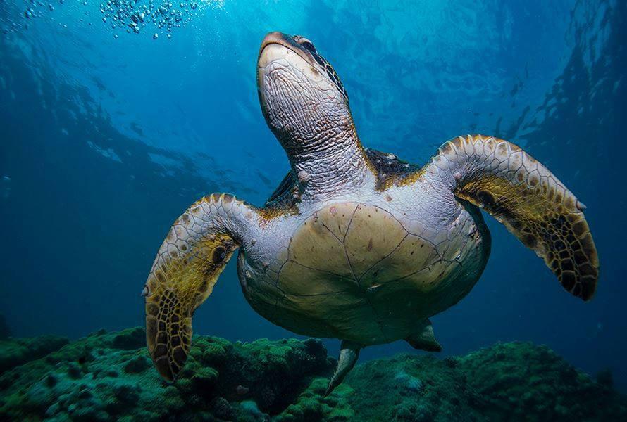 tartaruga marinha, curso, mergulho, rio, padi, scuba, dive