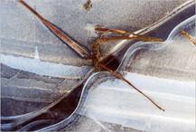 anja-krahe-3.jpg