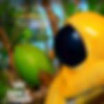 Calvin Harris, David Guetta, Avicii, Tiesto, Steve Aoki, Afrojack, Zedd, Kaskade, Skrillex, Deadmau5, Hardwell, Armin van Buuren, Steve Angello, Daft Punk, Mazai, DJ Mazai, Parallelbooking, Peter Brown, Moscow, Russia, Ibiza, USA, Miami, Flash Brothers, DJ