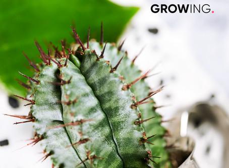 Kaktus Wallpaper. Phone Hintergrund als Freebie.