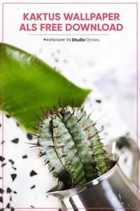 Heads up im #urbanjungle - StudioStories. kostenloser Bildschirmhintergrund für alle #plantlover #cactuslover und #sukkulenten Fans. Das kreative Wallpaper Design für dein Handy als Hintergrund kannst du dir gratis auf dem StudioStories.Blog herunterladen. Passend für alle gängigen Smartphones, wie iPhone X, XS, XR, 6, 7, Android, Samsung Galaxy und mehr. Wir sagen #befearless and #justkeepgrowing !
