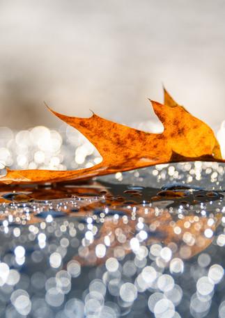 Fall Sparkle