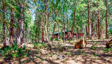 Cabin In The Woods View.jpg