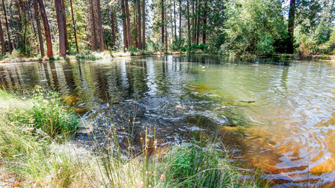 Fully Stocked Trout Pond.jpg