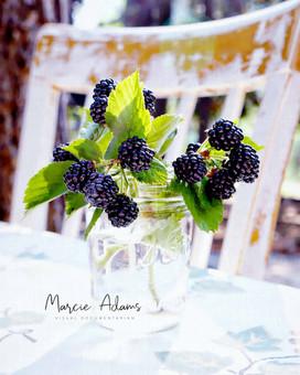 Marcie Adams Photography