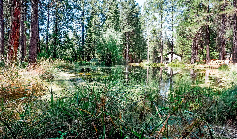 Workshop View From Trout Pond.jpg