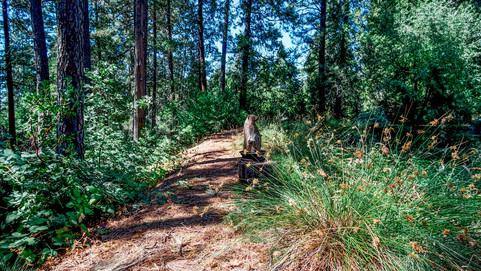 Trail Around Pond.jpg