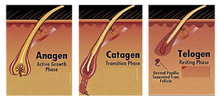 Anagen catagen telogen hair growth phases
