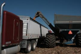 corn harvest 2008 001.JPG