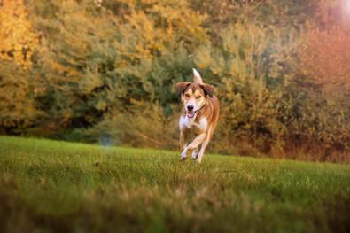 Photographie chien extérieur