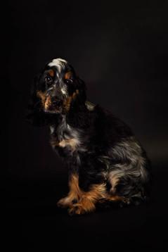 Photographie chien studio