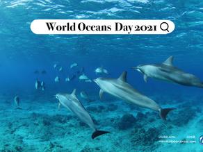 サンゴ礁の50%が破壊されている!?SDGsの目標を達成するために知っておきたいことWorld Oceans Day(世界海の日)って知ってる?
