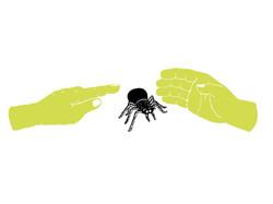 Spinnenangst_DS