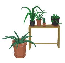 Living_Room_Plants_Aloe_edited