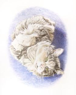 'Cat Study'