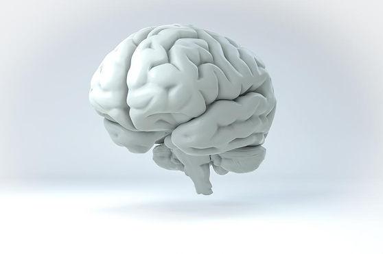 brain white.jpg