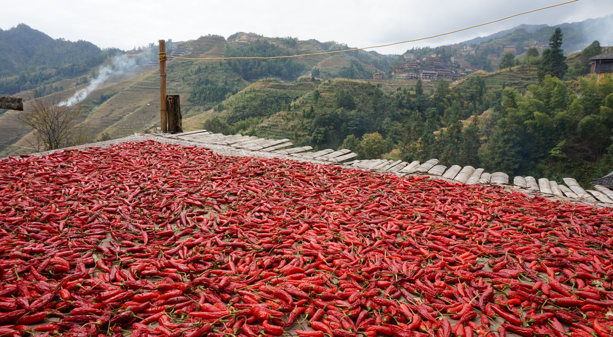 Red chilis being dried in the sun