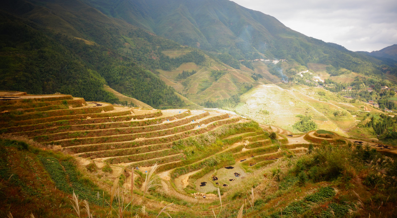 Longji rice terraces after being harvested