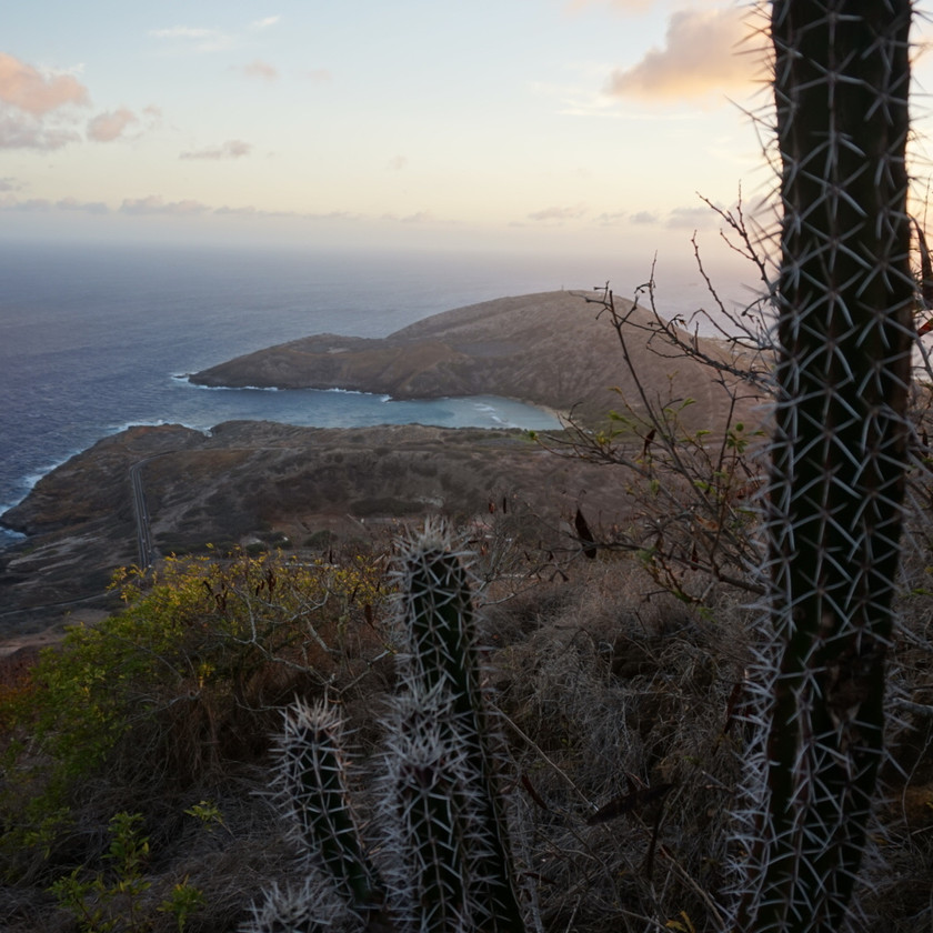 Ocean view with cactus from the top of Koko Head Crater