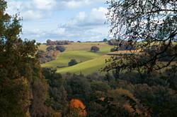 Winkworth Views