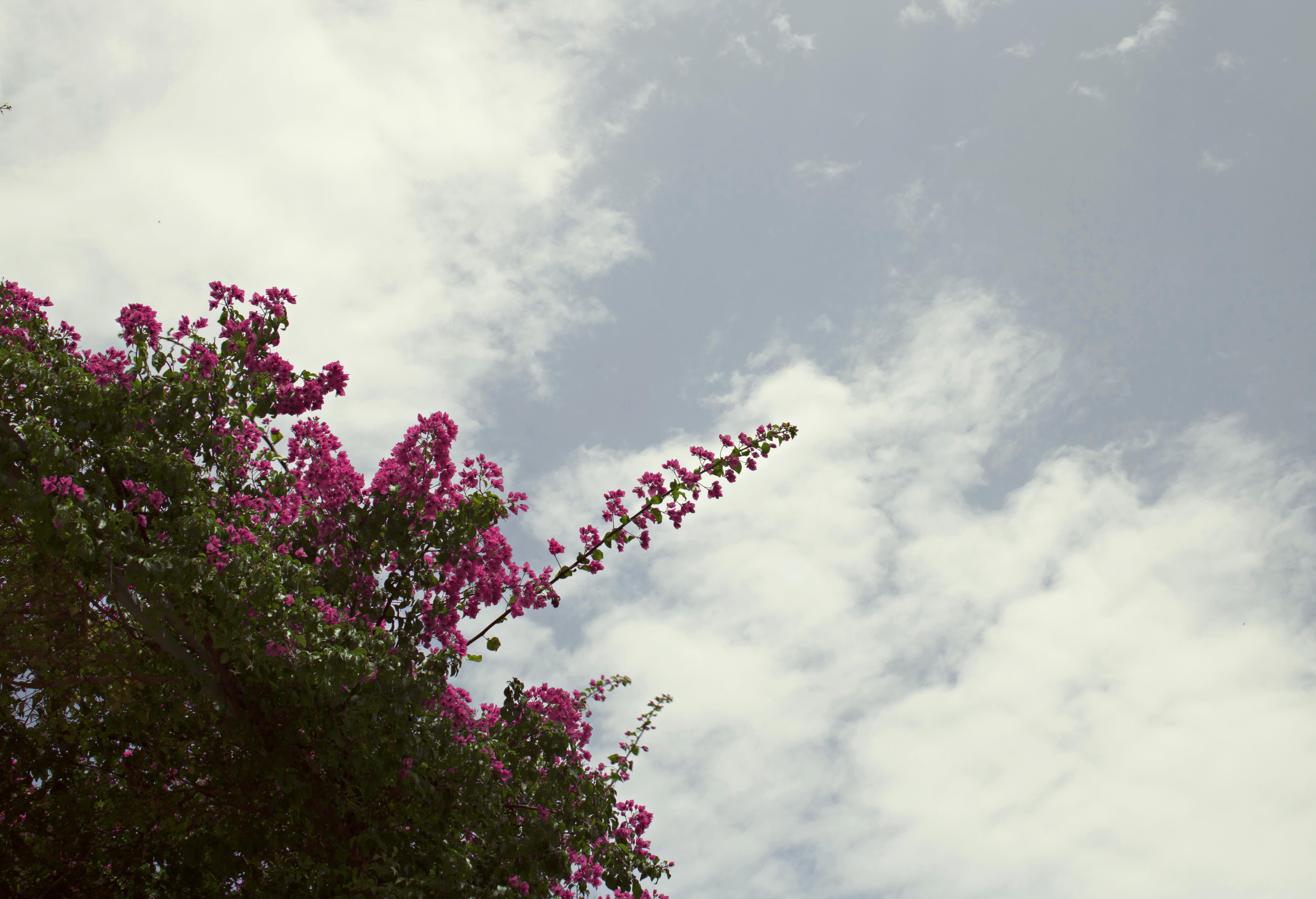 Beautiful Florals in Croatia