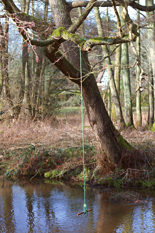 Woodland Walk Photography Surrey