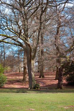 Outdoor Photography in Surrey