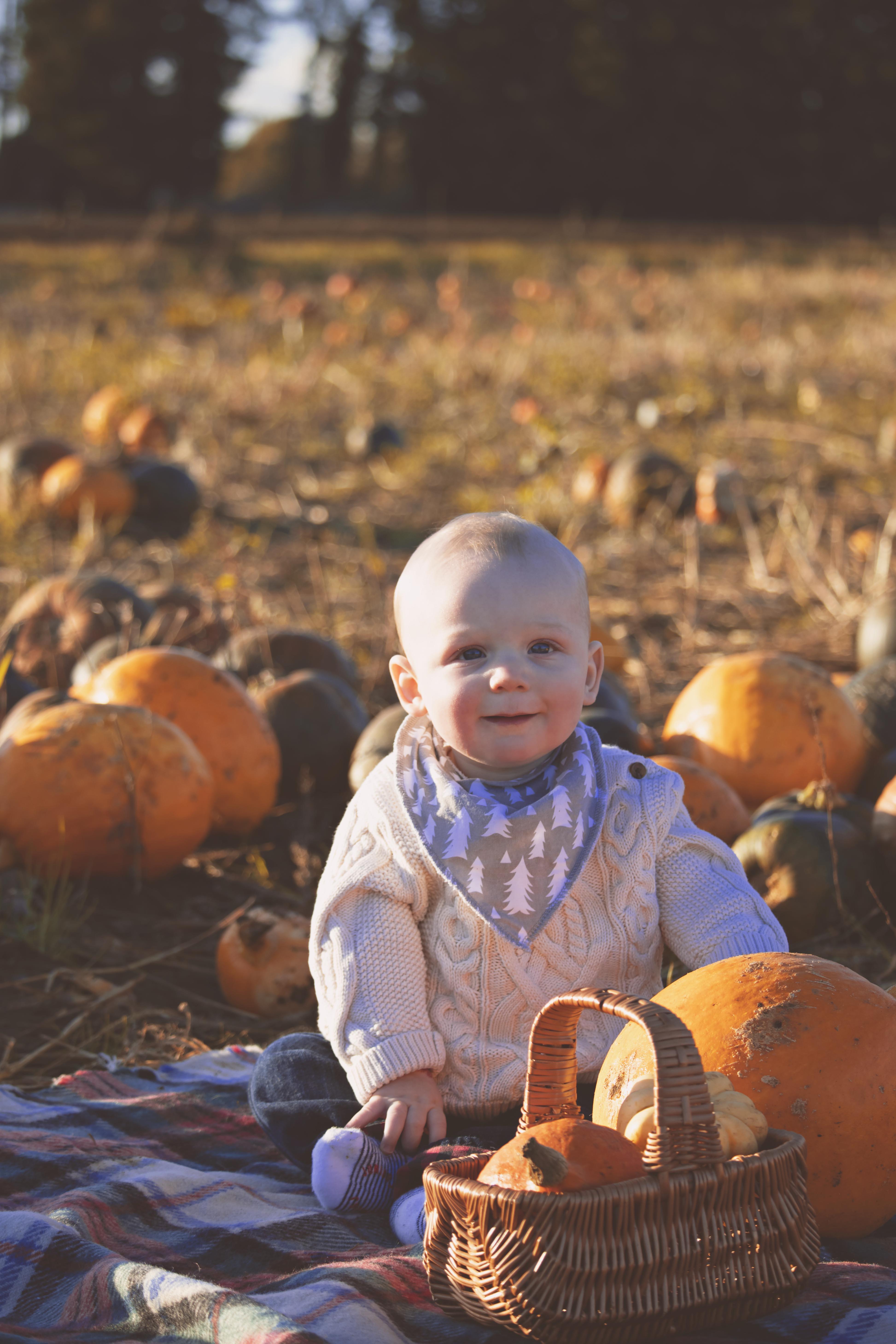 Sunset Pumpkin Photography