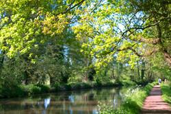 A Walk in Surrey