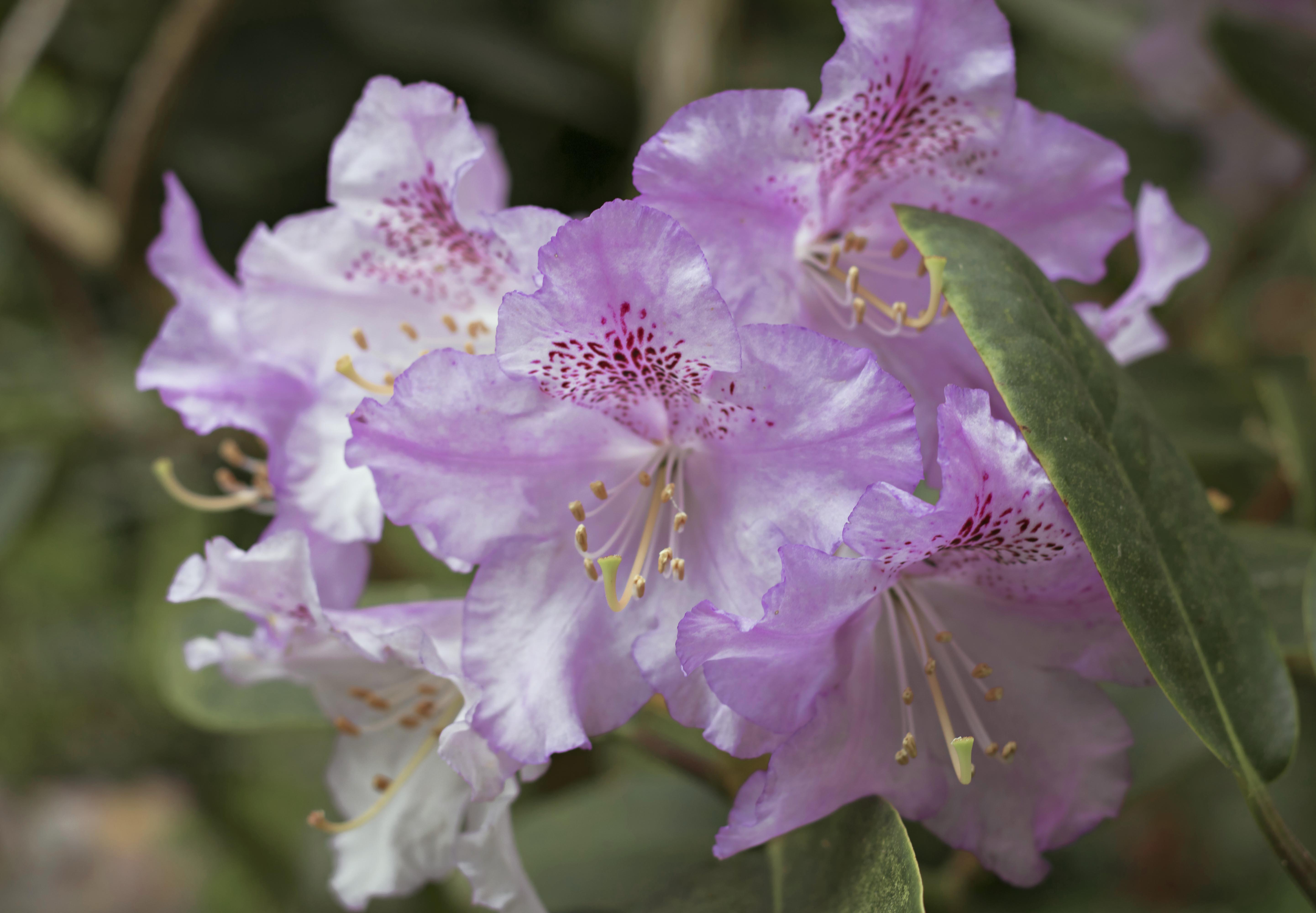 Surrey Spring Flowers