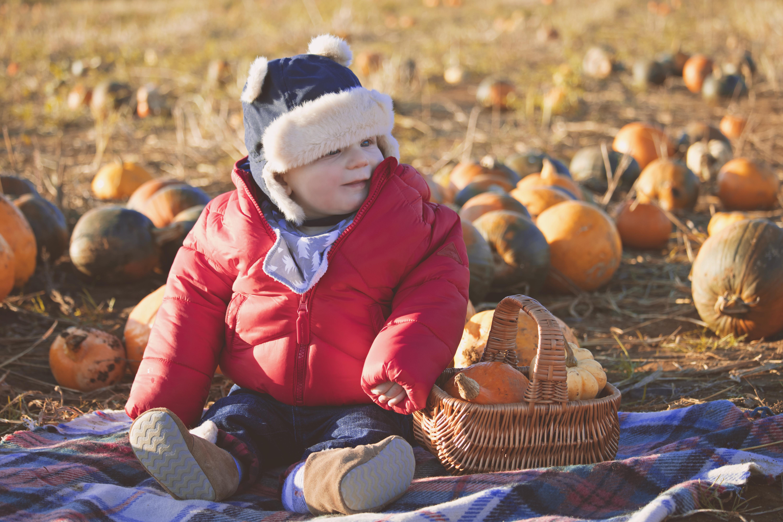 Pumpkin Picking Photography Mildford