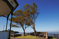 Trees at Clevedon Seafront