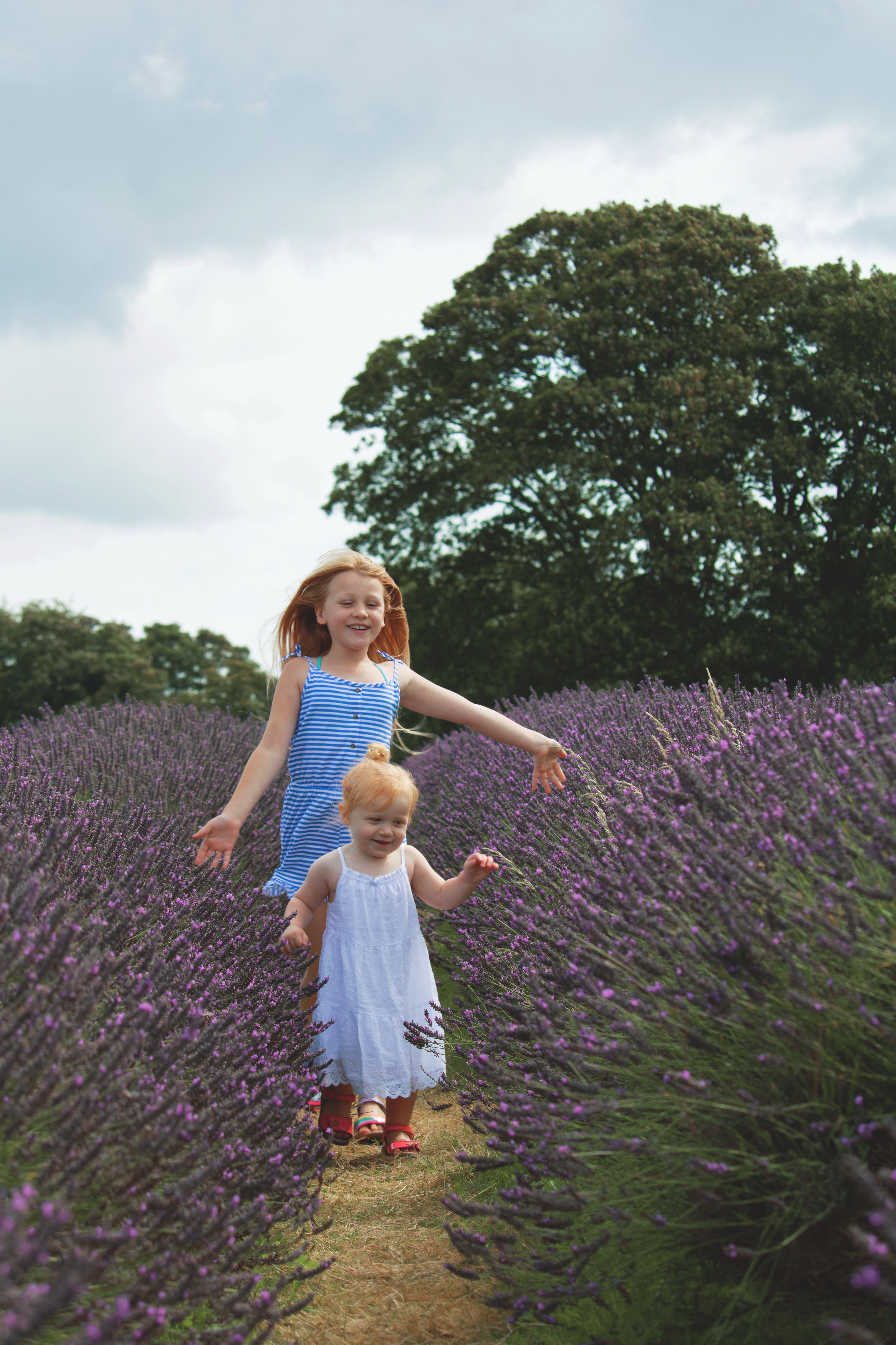 Lavender Family Shoot at Mayfield Lavender