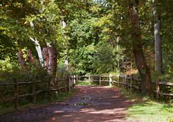 Beautiful Surrey Autmnal Walk