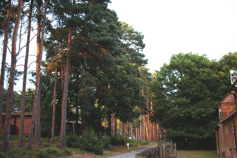 Forrest Landscape Photography
