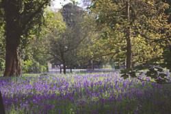 Beautiful English Landscape Bluebells