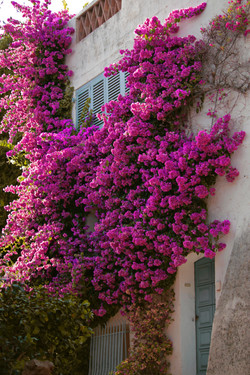 Stunning French Flowers